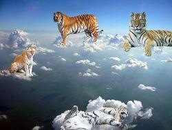 Tigres no ceo.jpg
