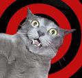 Gato psicodelico.jpg