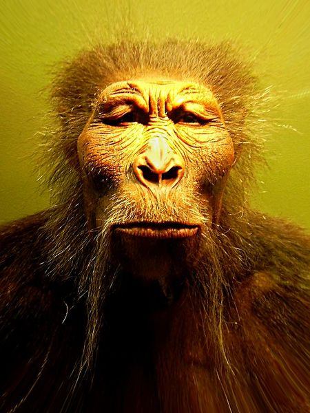 Paranthropus bosei, an extinct human species