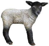 Lamb, a ovelha negra