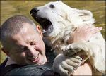 Knut fazendo um lanchinho