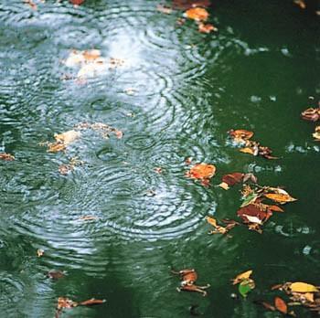 傘に当たる雨の音とか.jpg