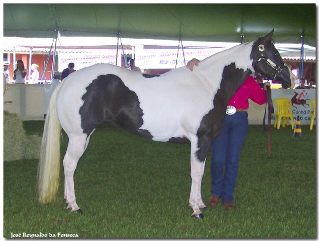 ファイル:Paint Horse REFON.jpg