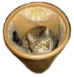 Catinbox.png