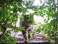Leaf-cat.jpg