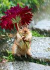 Squirrel-under-umbrella.jpg
