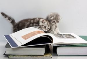 Cats books.jpg