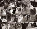 20cats.jpg