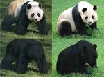 Panda All 01.jpg