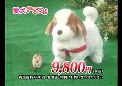 愛犬ロボ「てつ」.JPG