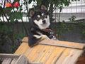 Doya Dog.jpg