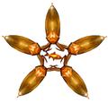 Golden bug ninjastar.png