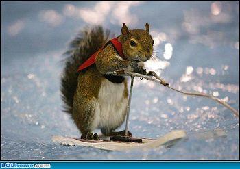 Squirrel winter sports.jpg