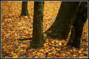 秋の風の匂いとか.jpg