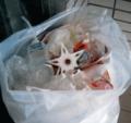 Dumpstar.png