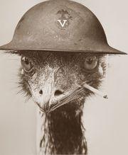 Emu Soldier.jpg