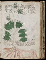 Een pagina van het manuscript.