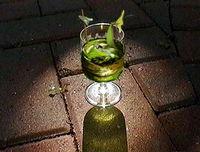 Froggy drink.jpg