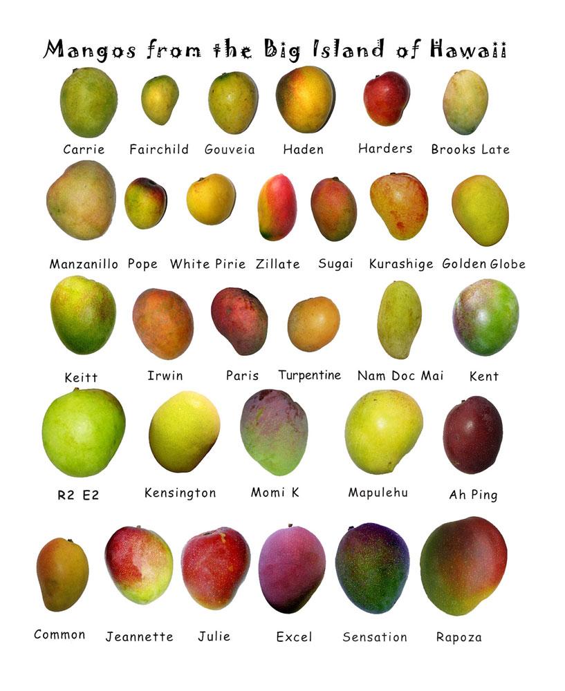 på Hawaii har Mangoene fått egne navn!