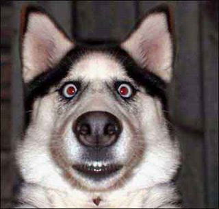 Funny dog face.jpg