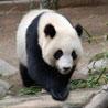 Panda.dat