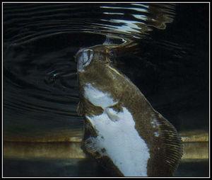 Fisk i vann.jpg