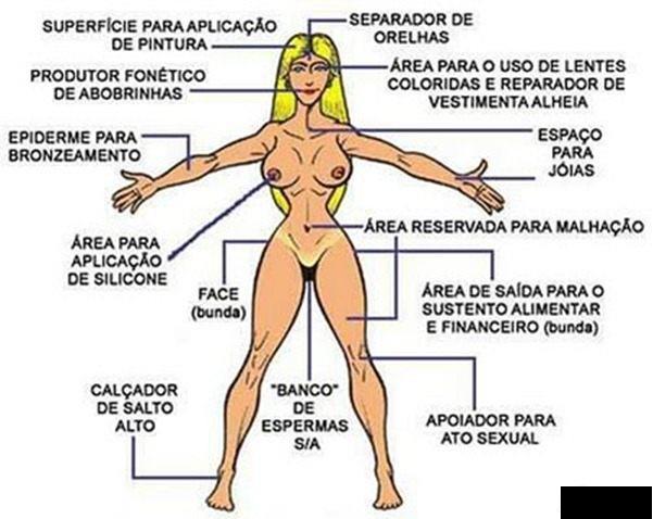 Anatomia-da-piriguete-1-.png