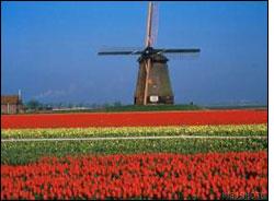 Arquivo:Holland-1.jpg