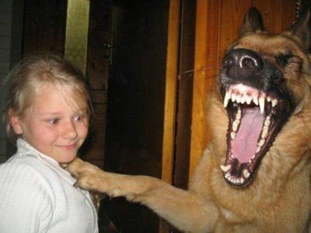 Arquivo:Cachorro comediante.jpg