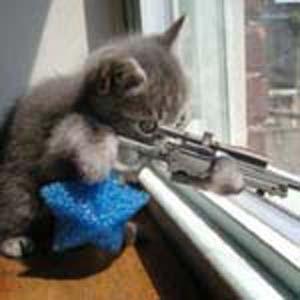 Gato Sniper.jpg