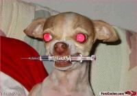 Arquivo:Cachorro do demo.jpg