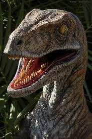 Velociraptor desciclop dia - Minecraft boquete ...