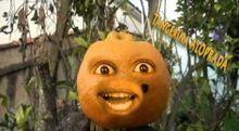 A tangerina aloprada