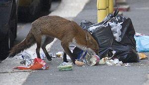 Image Result For Can Dog Mange