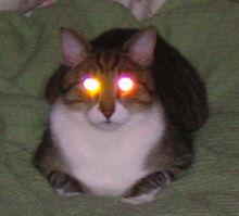 Gato prestes a soltar raios pelos olhos