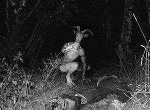 Homem-cervo.jpg