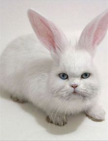 Um coelho-gato