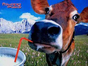 Vem beber leitinho vem - 2 1