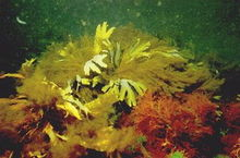 Algas emporcalhando uma praia qualquer.