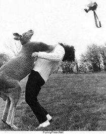 Kangaroo Fighter.jpg