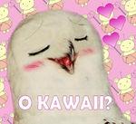 O kawaii.jpg