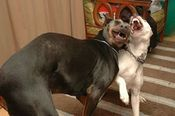 Cachorros fumando maconha.jpg
