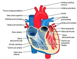Mapa do coração.PNG