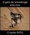 O gato está vivo.png