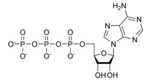 Estrutura química de Trifosfato de adenosina