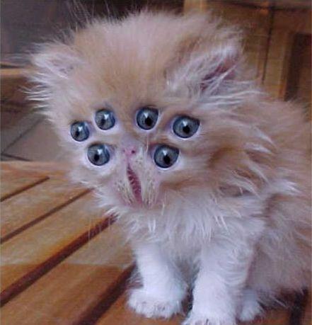 Alien kitty.jpg