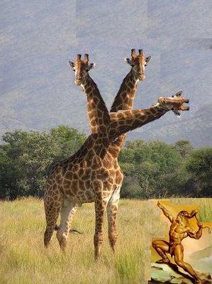 Sv Jacob ubiva girafu.jpg