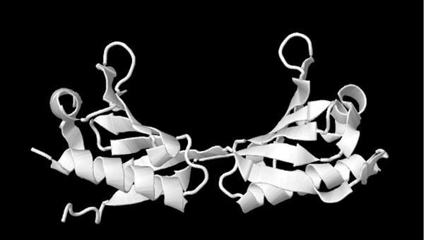 ไฟล์:Fsmprotein.jpg