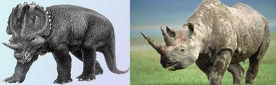 Centrosaurus.jpg