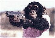 Arquivo:Chimpanzee-glock.jpg